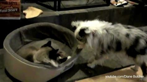 cats in dog beds compilation video of cats taking over dog beds