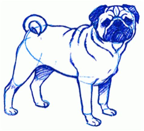 pug drawing step by step guide how to draw a pug