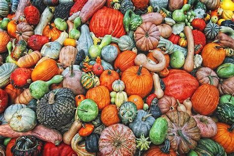 what color are pumpkins fall colors gourds and pumpkins by kevin gourds