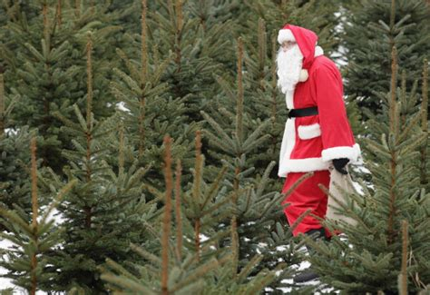 best places to buy christmas trees 171 cbs sacramento