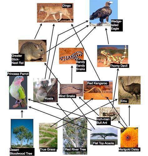 backyard food chain australia our backyard science assessment lara enriquez