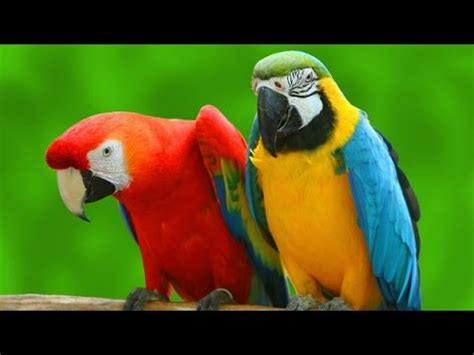 all colorful parrot species list a to z youtube