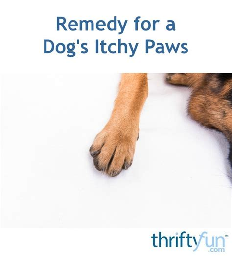 itchy paws remedy for a s itchy paws thriftyfun
