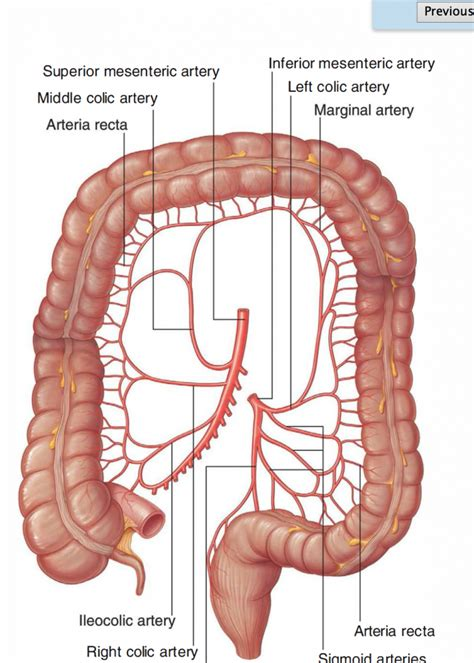 diagram of the colon transverse colon anatomy human anatomy diagram