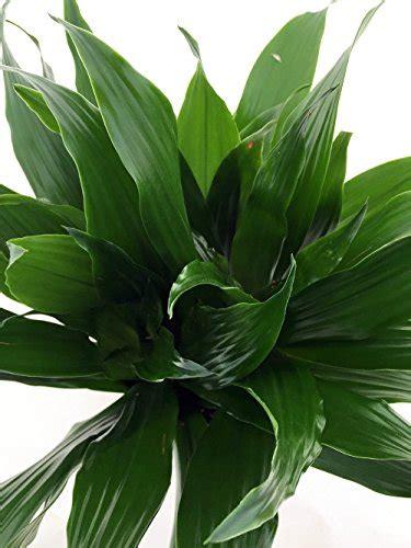 indoor plants  asthma  allergy sufferers