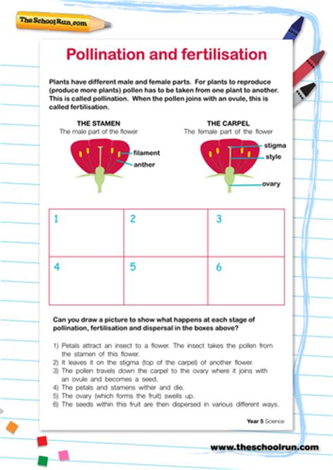 Pollination Worksheet Ks2 pollination and fertilisation by theschoolrun teaching