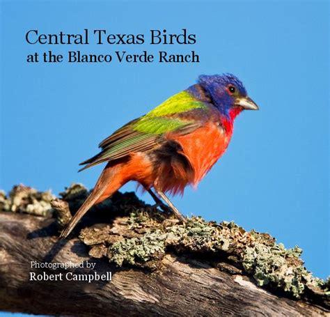 backyard birds of texas backyard birds north texas 2017 2018 best cars reviews