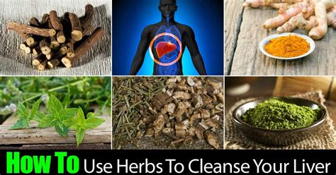 Spices Detox Liver by How To Use Herbs To Cleanse Your Liver
