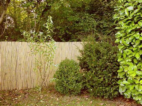 schilf pflanzen als sichtschutz 2158 sichtschutzzaun aus schilf 196 sthetik f 252 r ihren garten