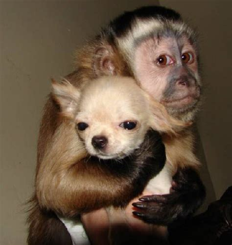 monkey and puppy monkey pictures animal pictures and