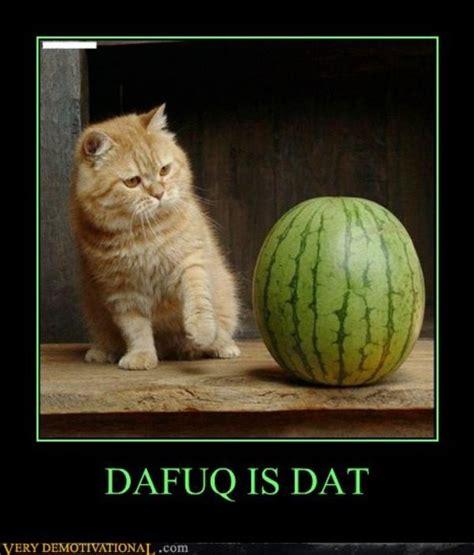 Dafuq Is This Meme - image 290835 dafuq know your meme