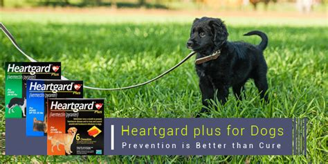 heartworm heartgard plus dogs heartgard plus a must treatment for dogs heartworm prevention