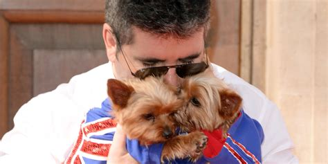 simon cowell dogs simon cowell orders helmets for pet dogs squiddly and diddly to protect them from