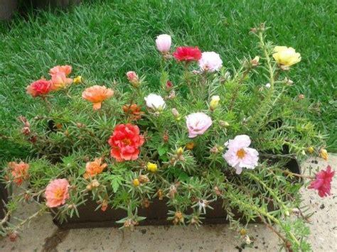 Simple Gardens amor de un rato mi jardin pinterest