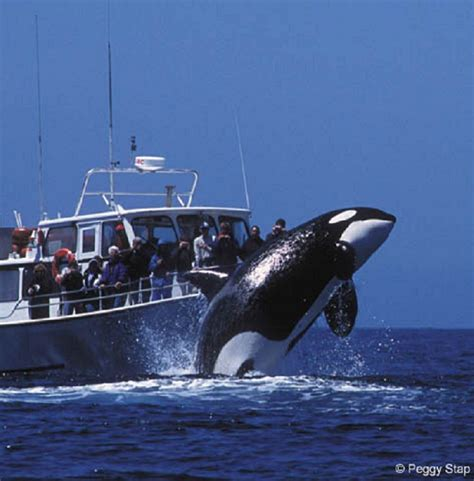 boat time in spanish whale watching monterey ca http www montereyinfocenter