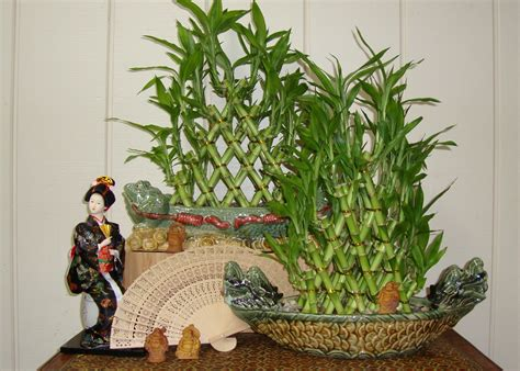Lucky Bamboo Plants In Bedroom Feng Shui Memsaheb Net