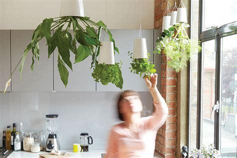 arredare casa con le piante arredare con le piante casa design
