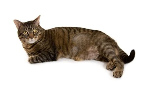 in what episode cat goes bald reasons for bald patches on cats argos pet insurance