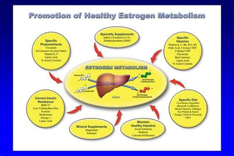 healthy fats to increase estrogen how to naturally increase testosterone and decrease