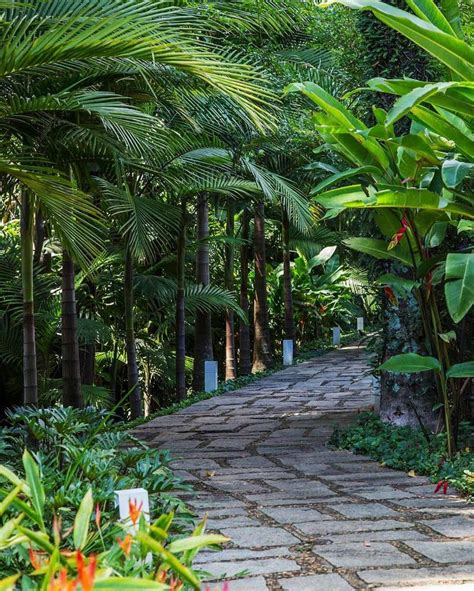 tropical landscape 1999 best images about tropical gardens on
