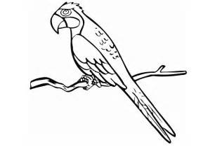 free printable coloring pages for free printable parrot coloring pages for