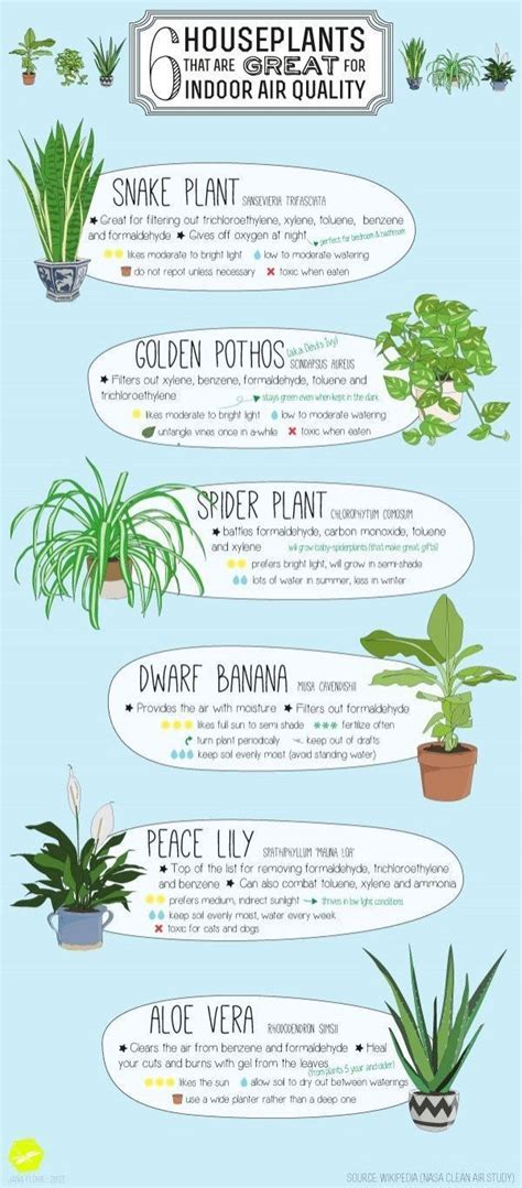 benefits of house plants 20 home decor cheat sheets that will have you decorate