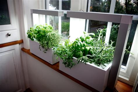 herb garden indoors herbs in window sill cast podder
