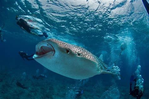 dive maldives luxury liveaboard maldives diving safari boats maldives