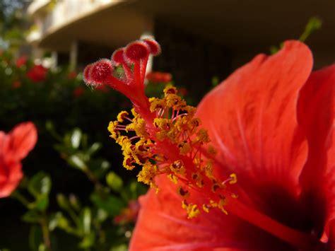 foto di fiori esotici fiori esotici foto immagini macro e up macro