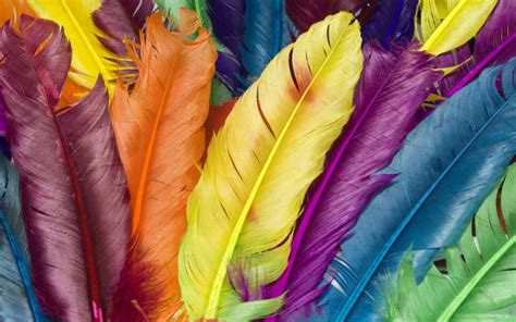 colorful feather 40 free colorful wallpapers to spice up your desktop