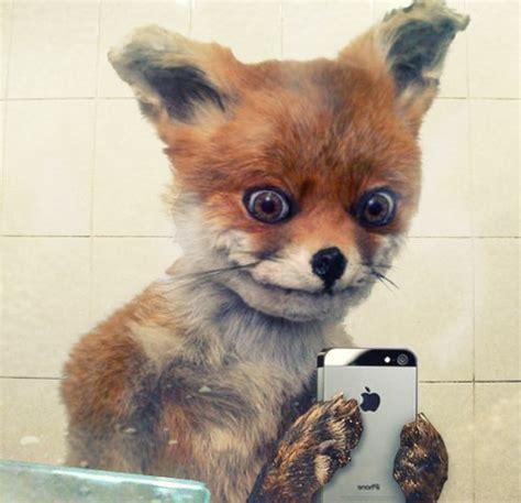 Taxidermy Fox Meme -