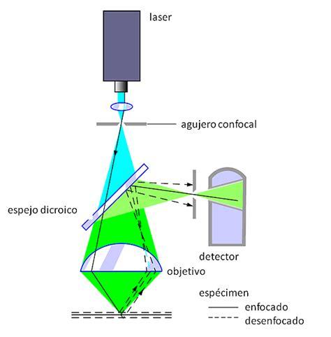 iluminacion ultravioleta microscopio de luz ultravioleta