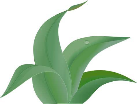 leaf clip art at clker com vector clip art online leaves 2 clip art at clker com vector clip art online