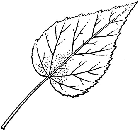 Viva Painting By Maple Leaf hibiscus leaf drawings hibiscus leaves and