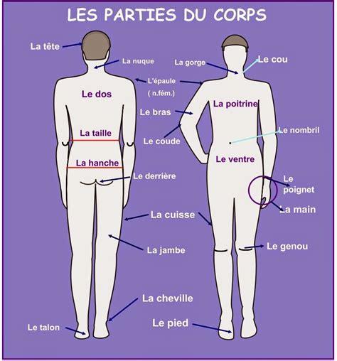 picture of a l le fle 192 l alfred ayza les parties du corps