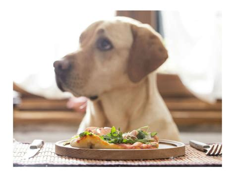 restaurant for dogs friendly bars and restaurants guide onmilwaukee