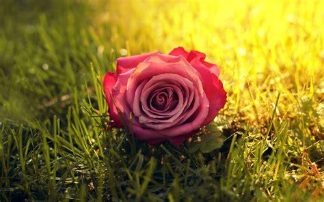 flowers that bloom at beautiful flowers wallpapers flower wallpaper 16 responsive