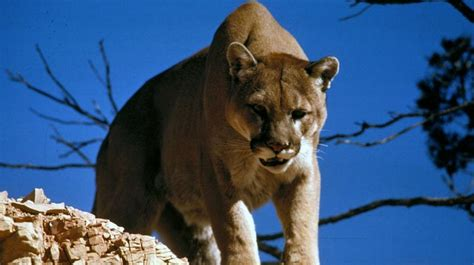 7 Most Animals by Most Dangerous Animals In America Survival