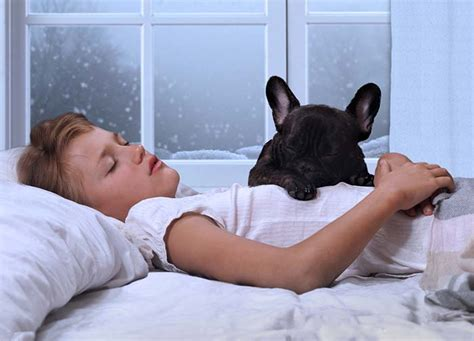 do dogs sleep why do dogs sleep more in winter and should you be concerned