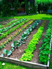 Small Vegetable Garden Design Ideas Backyard Vegetable Garden Design Plans Ideas Design Bookmark 15239