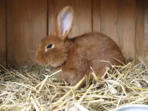 kaninchen haus kaninchenstall selbst bauen anleitung markt de