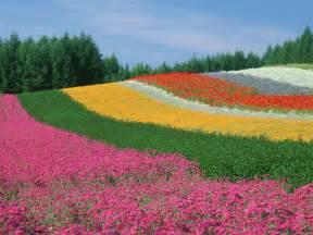 amazing gardens world s amazing gardens and flower fields
