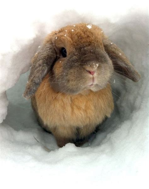 images  rabbits  pinterest news