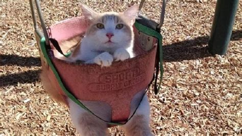 swing cat pupsonswings