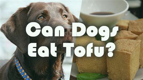 can dogs eat tofu can dogs eat tofu pet consider