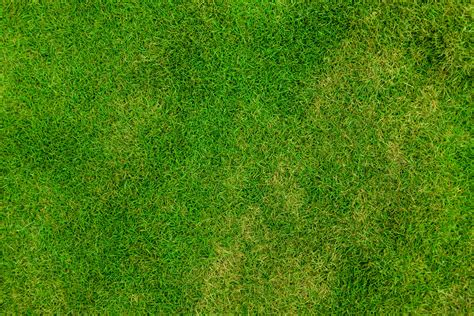 field pattern en francais free images outdoor abstract plant sport field lawn