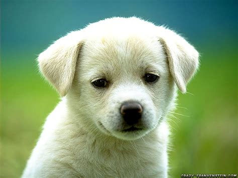 5 in 1 puppy sismandarin eric daniel hong kong