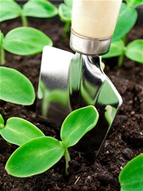 Epsom Salt And Gardening by Gardening With Epsom Salt Usa Garden Company