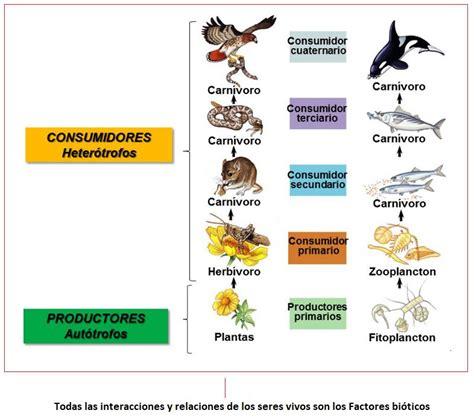 cadenas troficas clasificacion cadena alimenticia y red tr 243 fica terrestres y acu 225 ticas