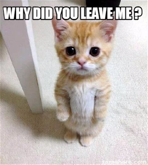 Why Me Meme - meme creator why did you leave me meme generator at